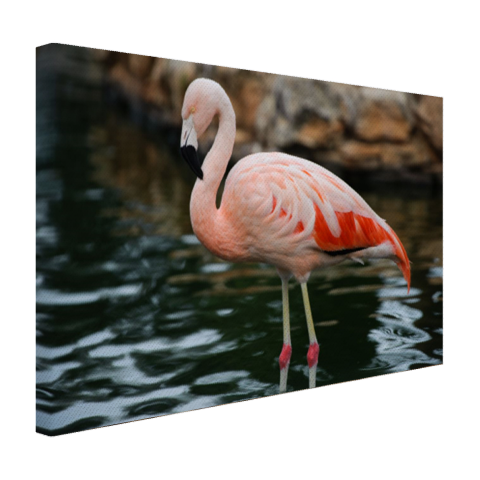 Flamingo in water voor rotsen Canvas