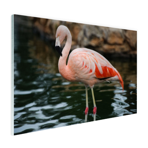 Flamingo in water voor rotsen Glas