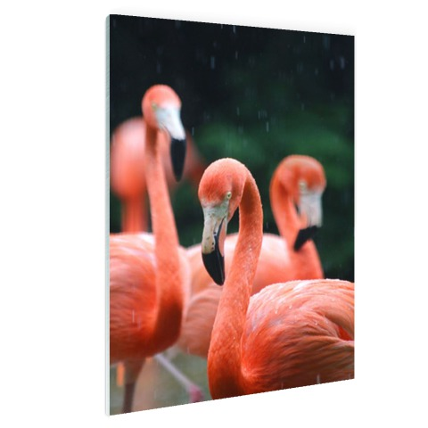Flamingos in de regen Glas