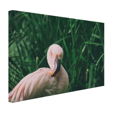 Roze flamingo in het riet Canvas