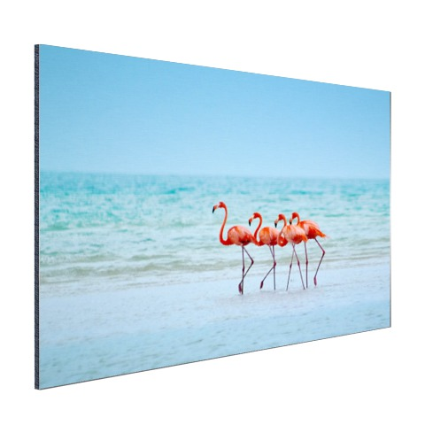Roze flamingos in het water fotoprint Aluminium