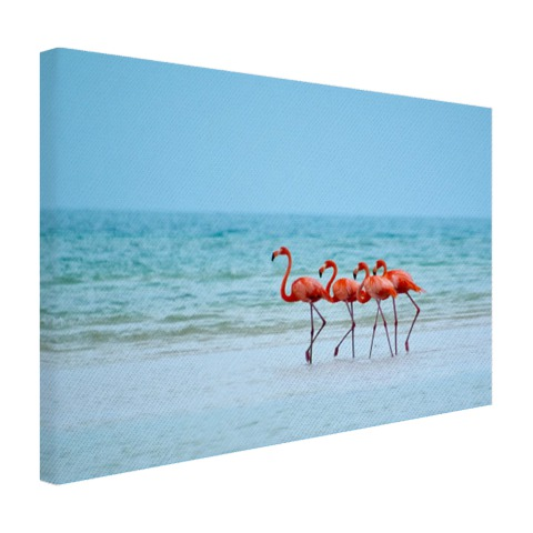 Flamingo's in het water op canvas