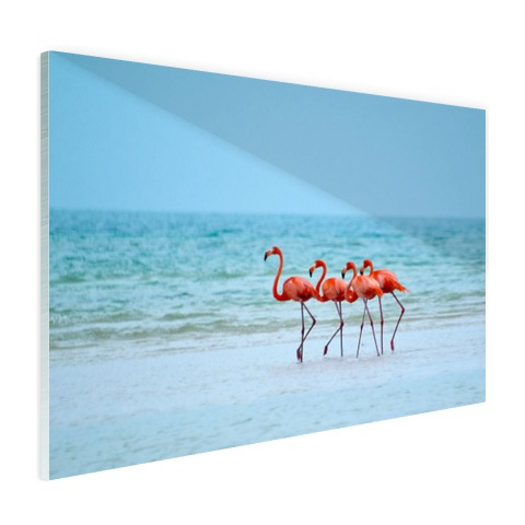 Roze flamingos in het water fotoprint Glas