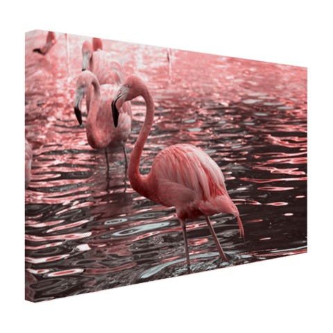 Roze flamingos in water met reflectie Canvas