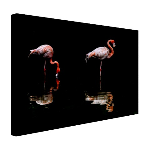Twee flamingos met reflectie in water Canvas