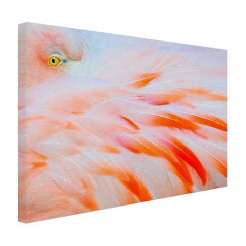 Zachtroze flamingo veren Canvas