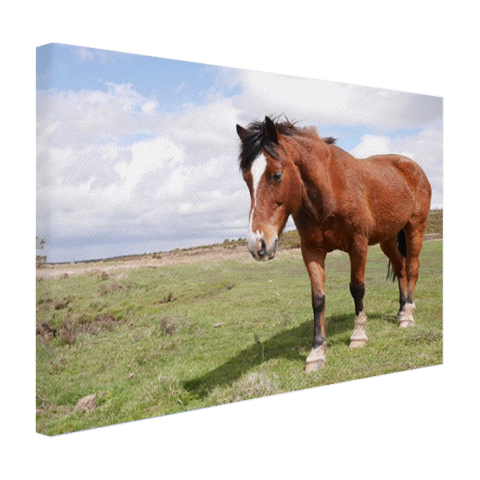 Paard staat in gras Canvas