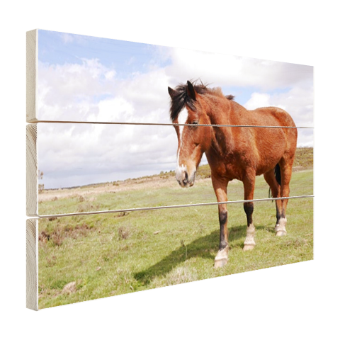 Paard staat in gras Hout