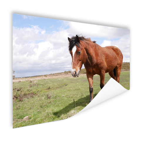Paard staat in gras Poster