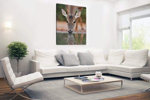 Drinkend hert fotoprint Canvas
