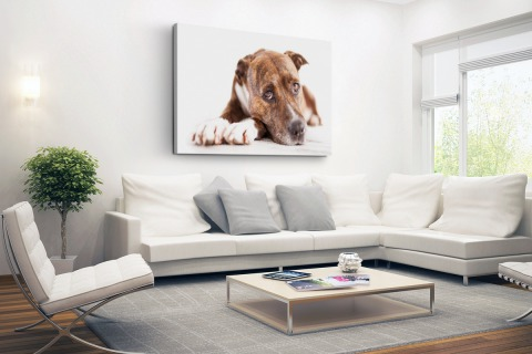 Liggende hond fotoprint Canvas