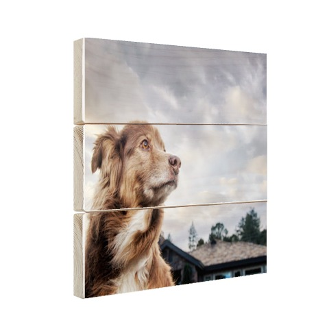 Starende hond Hout