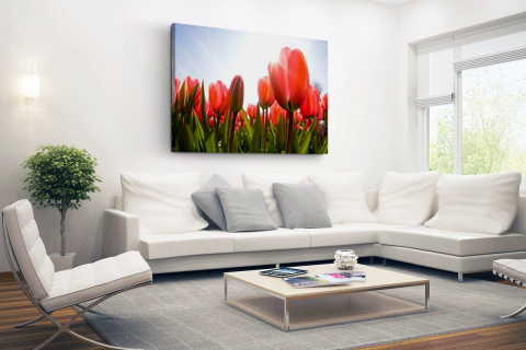 Rode tulpen in de zon Canvas