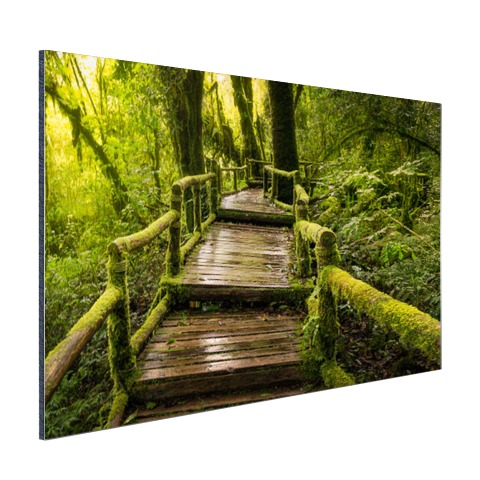 Mooi regenwoud en jungle foto print