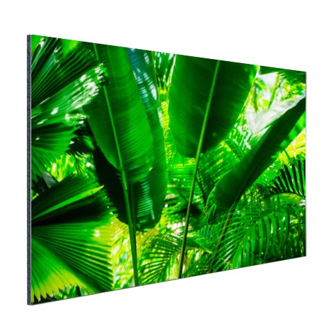 Tropische bladeren in jungle foto print