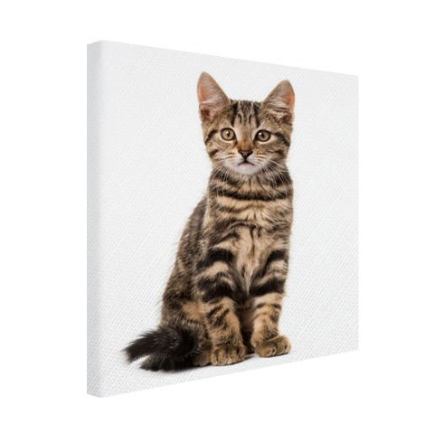 Poserende kitten Canvas