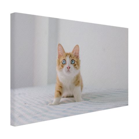Schattige kitten Canvas