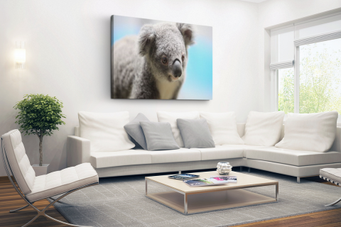 Een close-up van een koala Canvas
