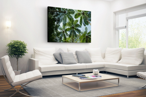 Bomen en bladeren in jungle Canvas