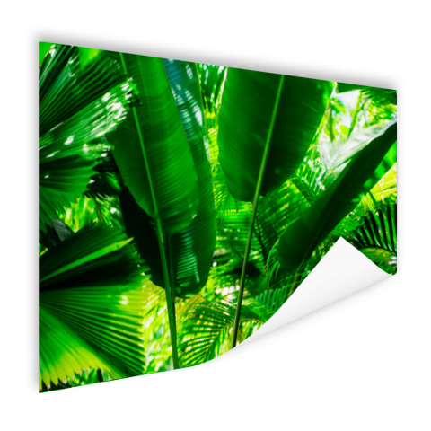 Tropische bladeren in jungle fotoprint Poster