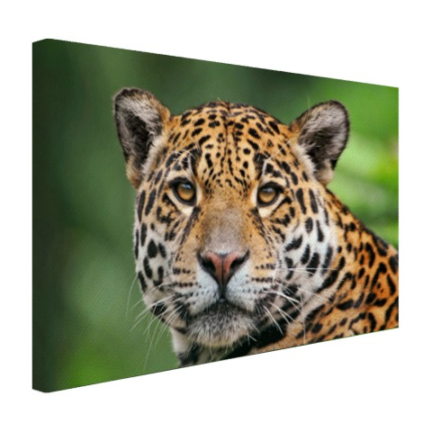 Close-up luipaard fotoprint Canvas