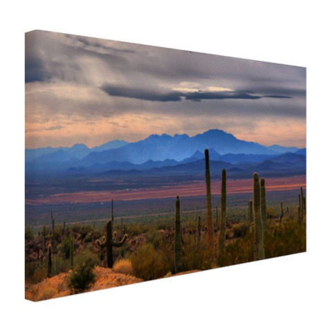 Sonoran woestijn Mexico Canvas