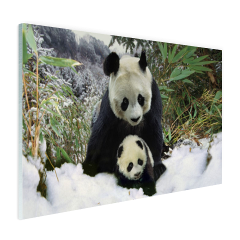 Moeder panda en welp in de winter Glas