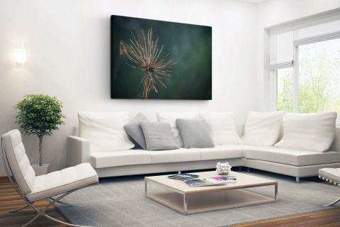 Droge bloem fotoprint Canvas