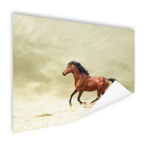 Galopperend paard Poster