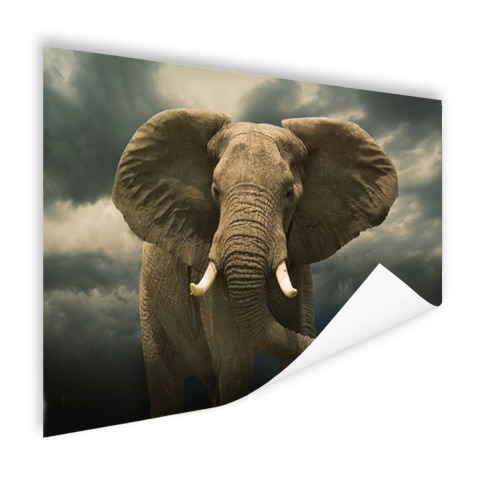 Afrikaanse olifant donkere wolken Poster