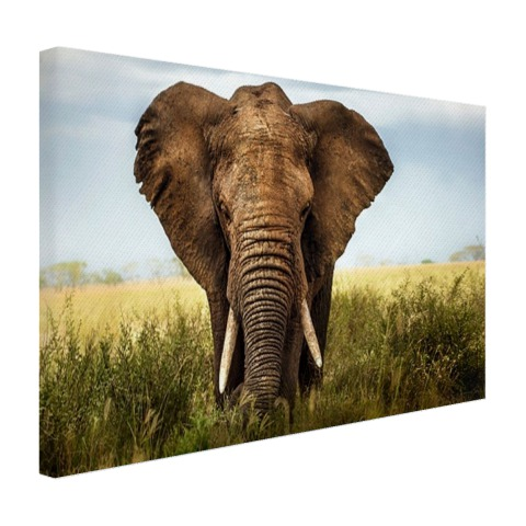 Olifant op canvas