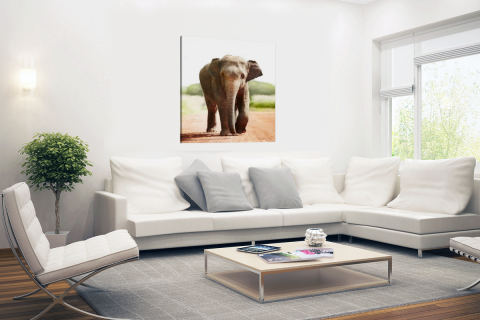 Wandelende olifant Canvas