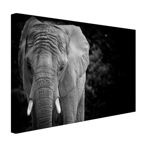 Olifant zwart-wit Canvas