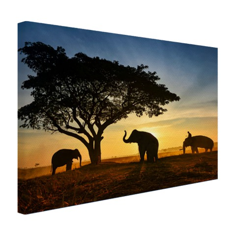 Silhouet Thaise olifant zonsopgang Canvas