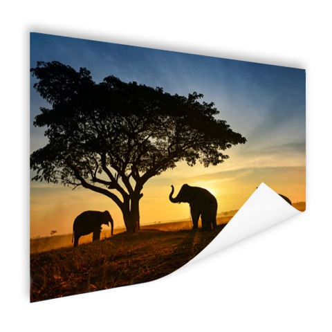 Silhouet Thaise olifant zonsopgang Poster