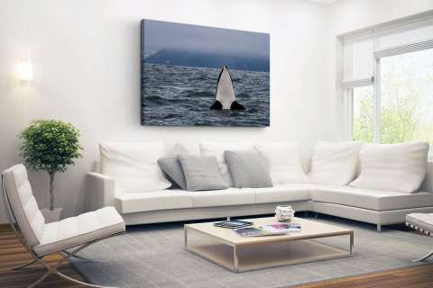 Orka boven water Canvas
