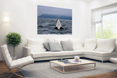Orka boven water Poster