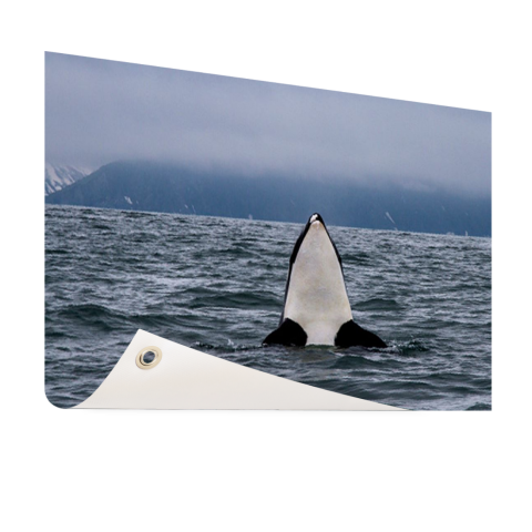 Orka boven water Tuinposter