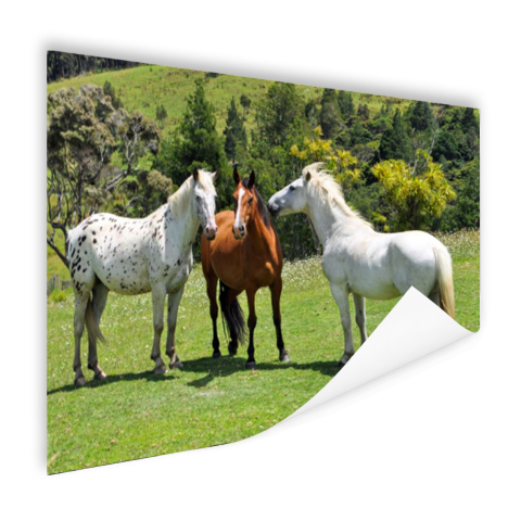 Drie paarden Poster