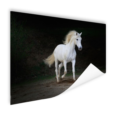 Wit paard foto Poster
