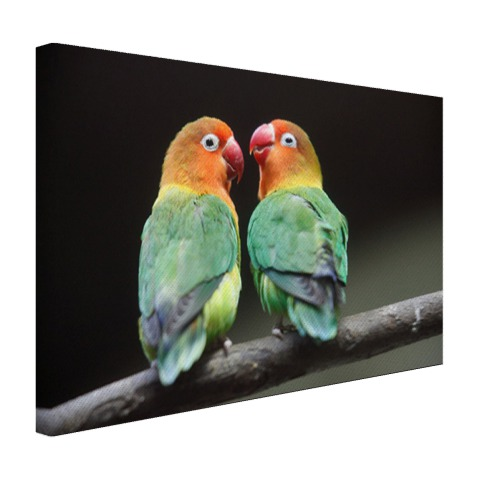 Lovebirds papegaaitjes fotoprint Canvas