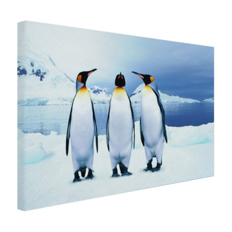 Drie pinguins portret Canvas
