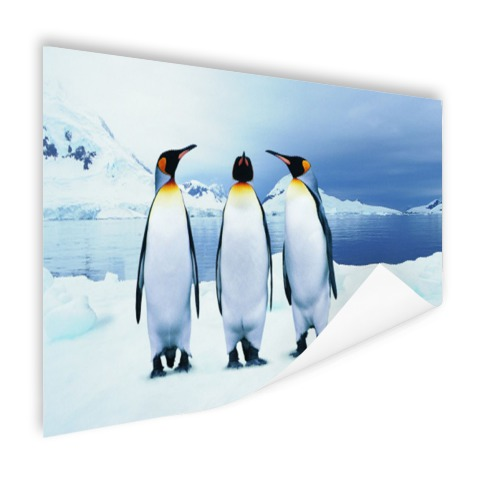 Drie pinguins portret Poster