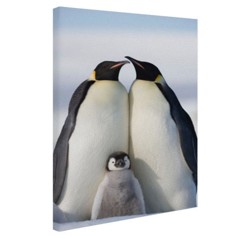 Pinguingezin fotoprint Canvas