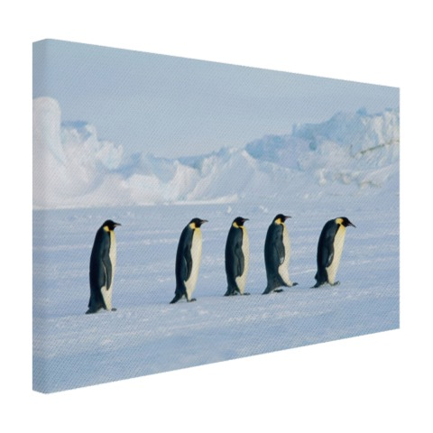 Vijf keizerpinguins Canvas