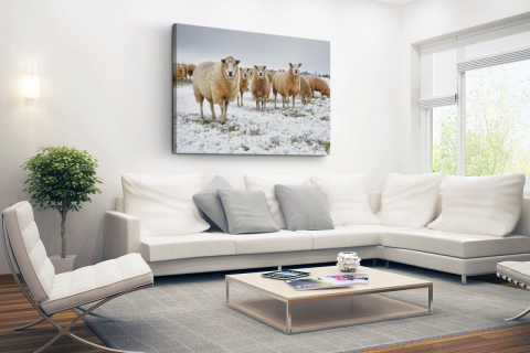 Schapen in een winterlandschap Canvas