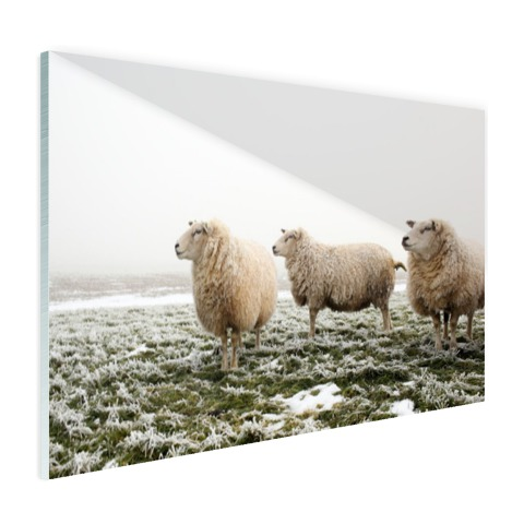Drie schapen in de winter Glas