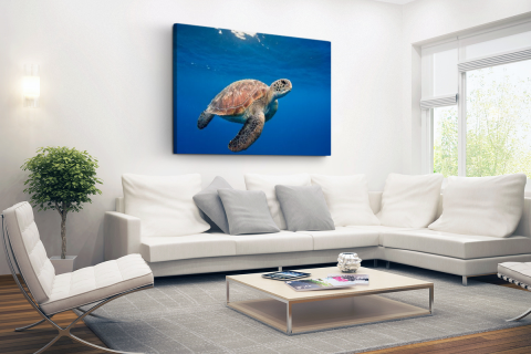 Schildpad in de oceaan Canvas