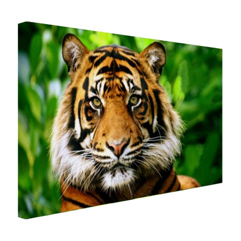 Tijger in de jungle op canvas