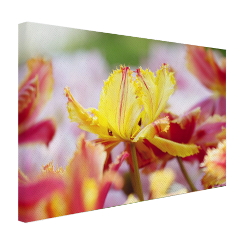 Close-up tulp Canvas